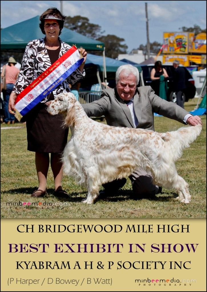 Ch. Bridgewood Mile High (Myles)