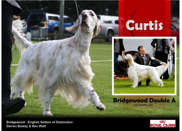 Ch. Bridgewood Double A Curtis